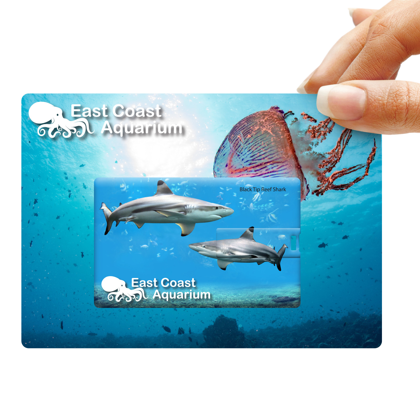 Promotional Product Credit Card Flash Drive on Custom Backing Card
